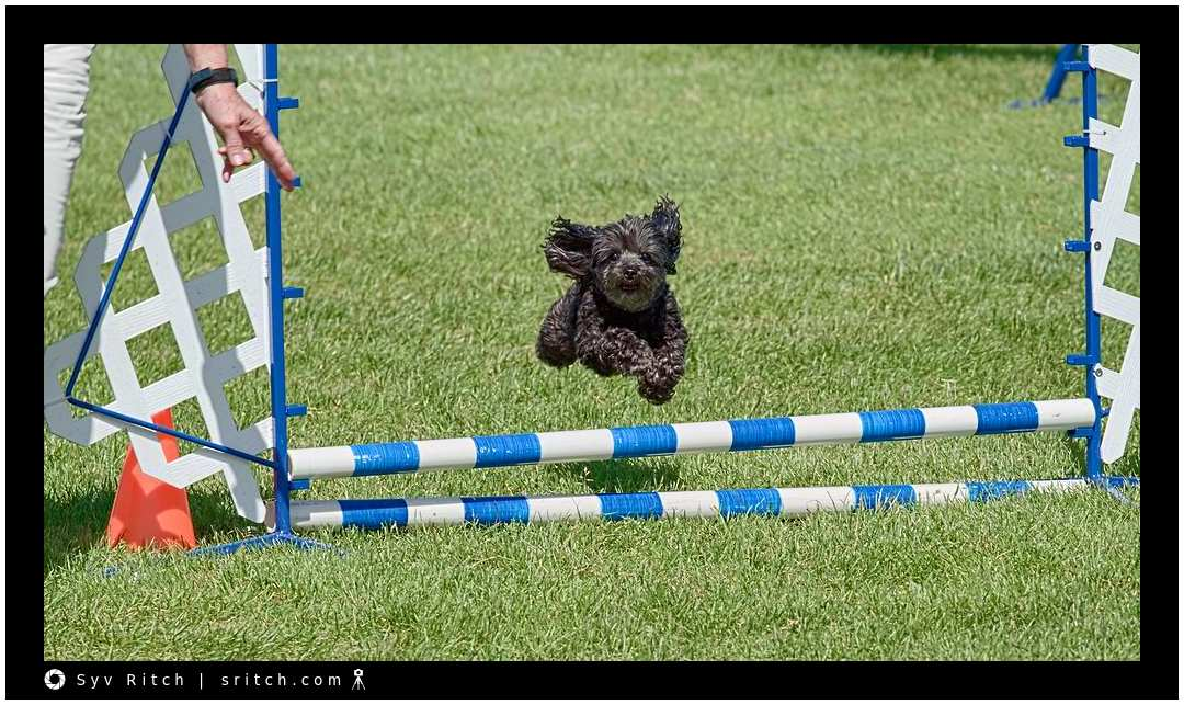 Great Dogs at Agility