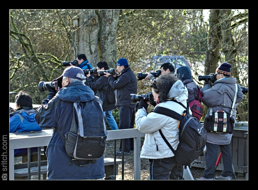 Group of Chinese photographer trying to photograph hummingbirds