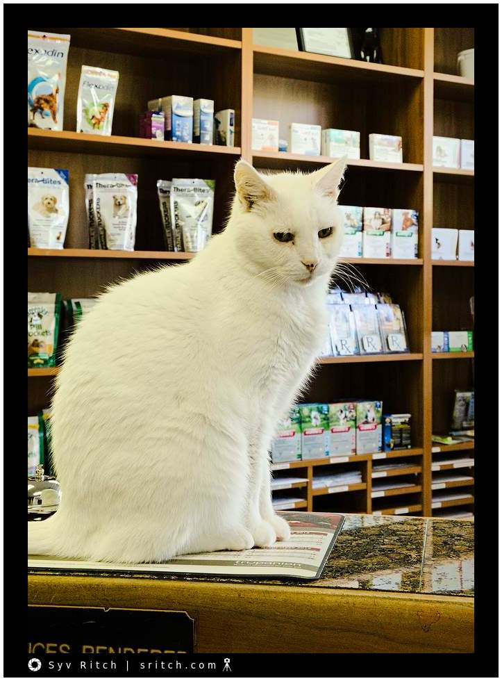 White cat sitting on counter
