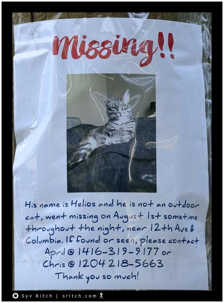 Another missing cat sign