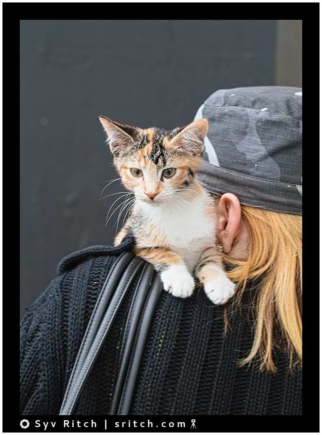 kitten on the shoulder of her new owner