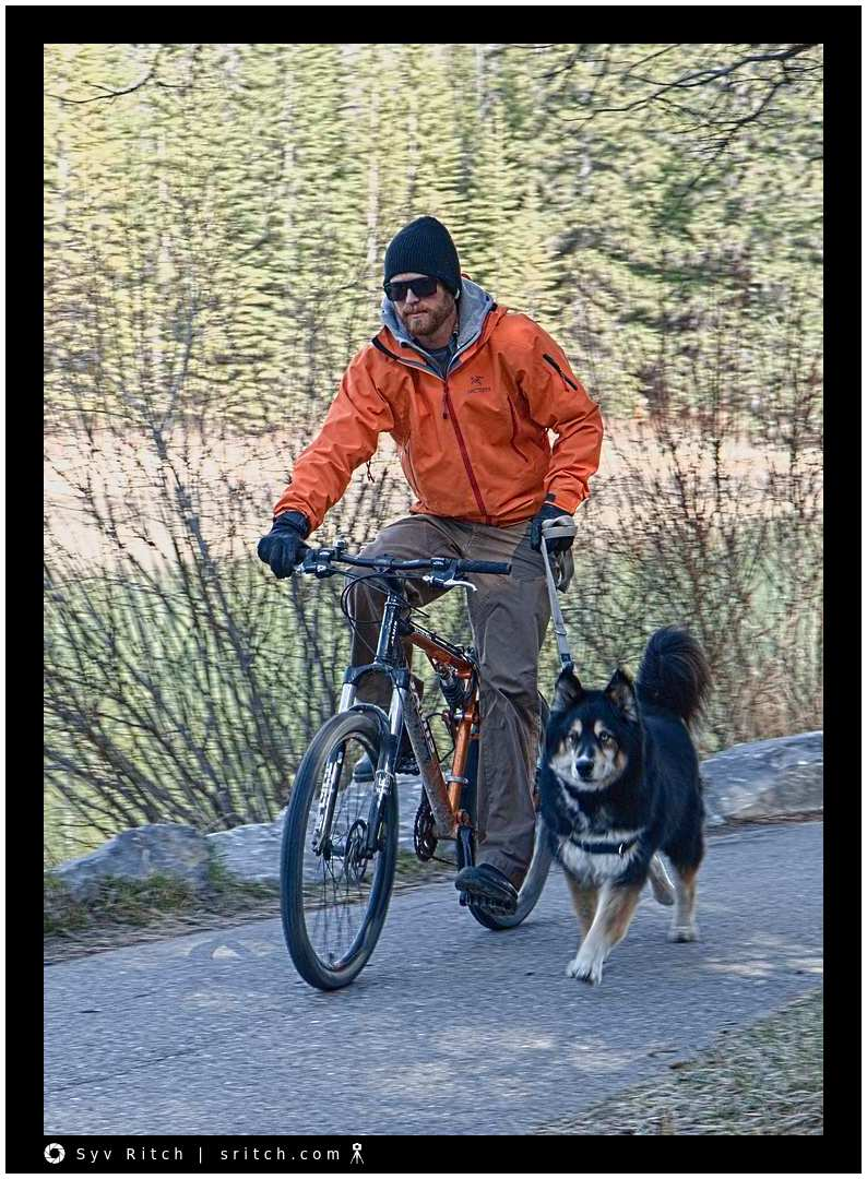Man in winter clothes cycling with his dog in the forest around Banff, Alberta