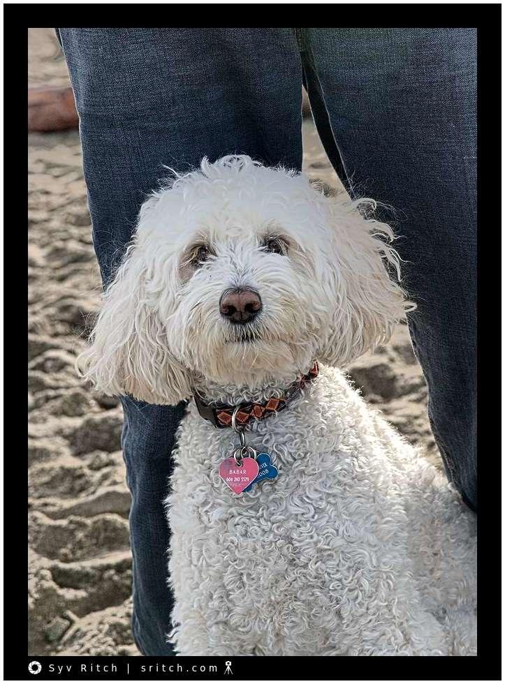 Babar, the dog, at the beach