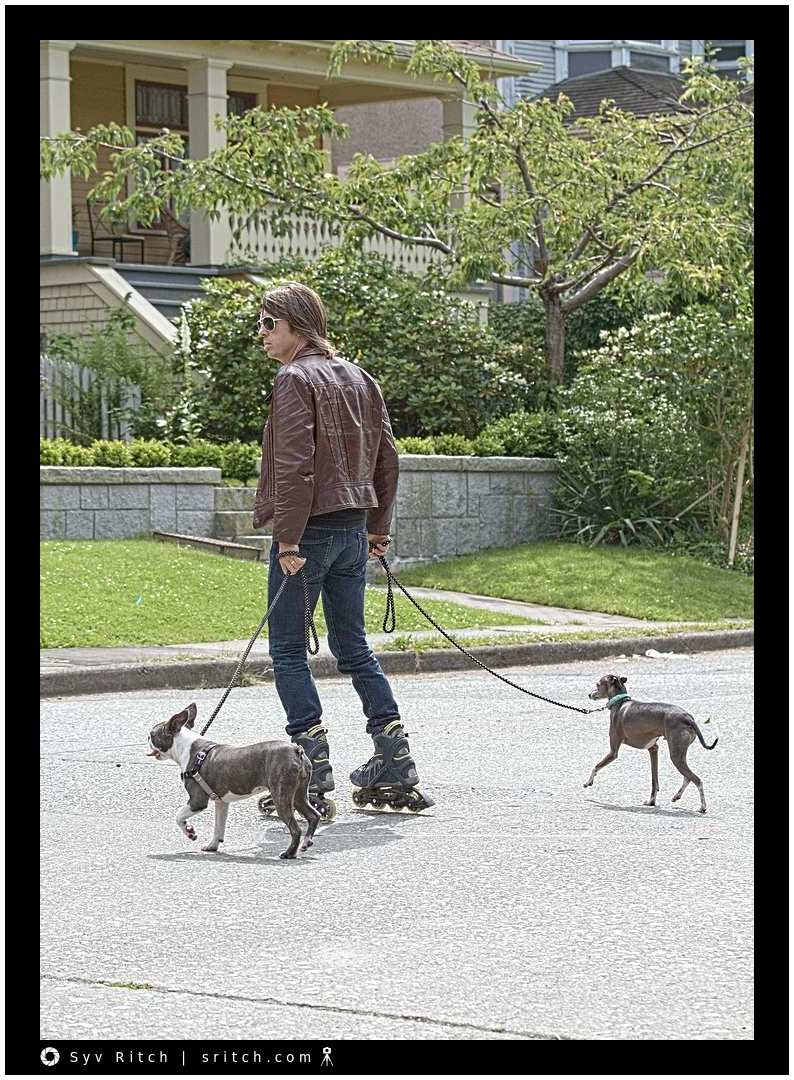 Roller-blading with an Italian Greyhound and a Boston Terrier: Vancouver, BC