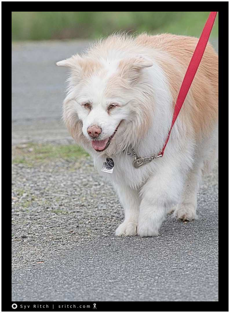 Dog Smiling: Vancouver, BC