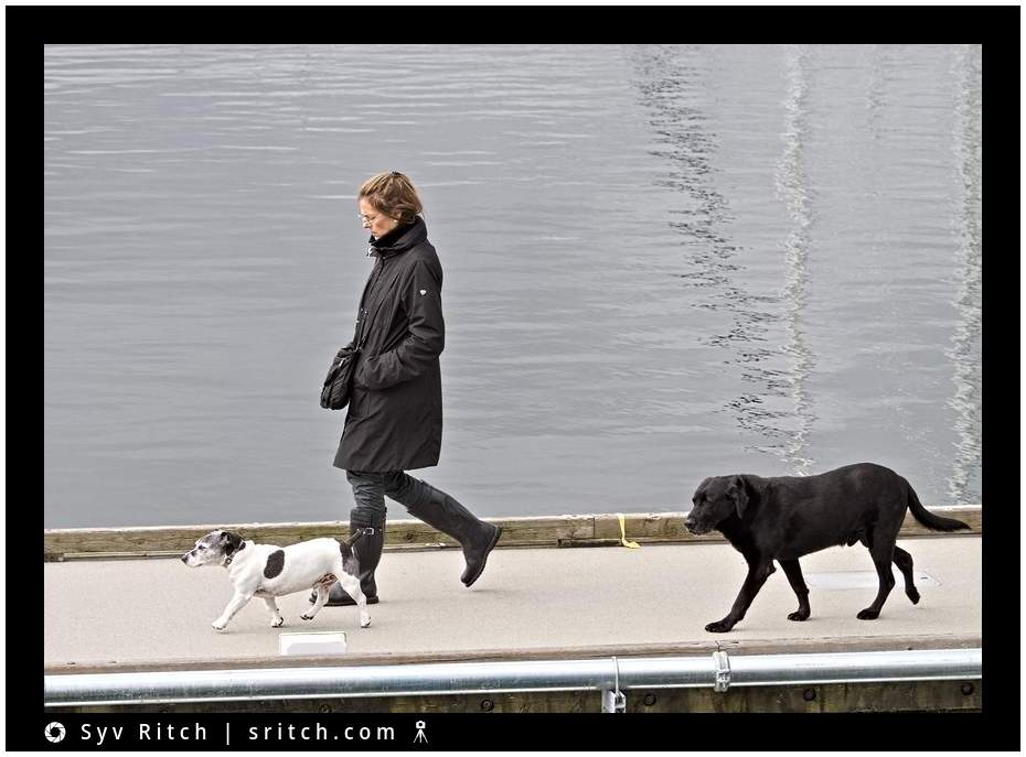 the crew: a jack russell, a person and a black lab going to their boat