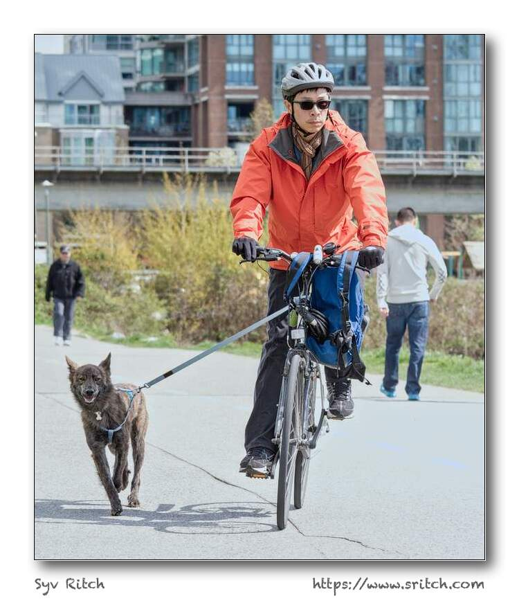 cycling with a running dog