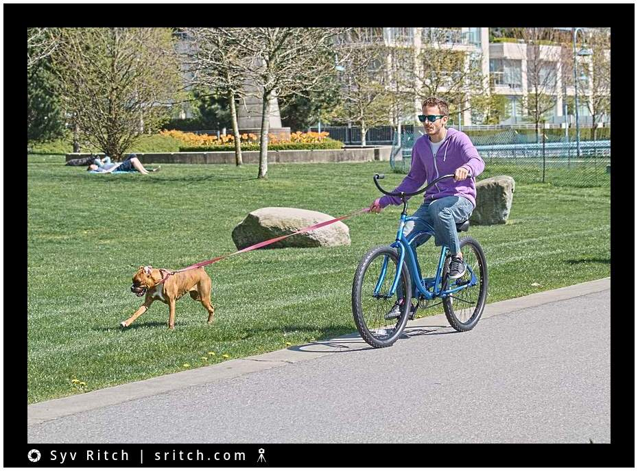 cycling with a pitbull