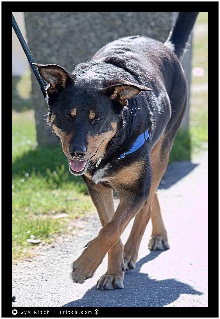 Dog Walking: West Vancouver, BC
