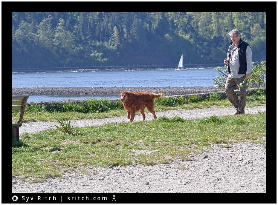 man walking with his golden retriever by the beach