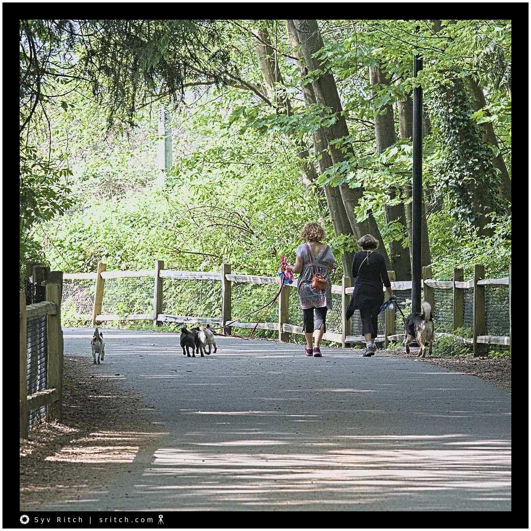 Walking With Their Dogs: West Vancouver, BC