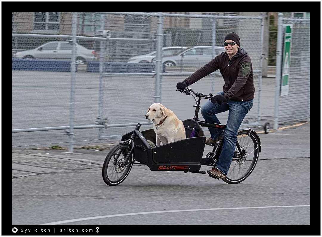 Bullitt cargo bike with Golden Retriever option