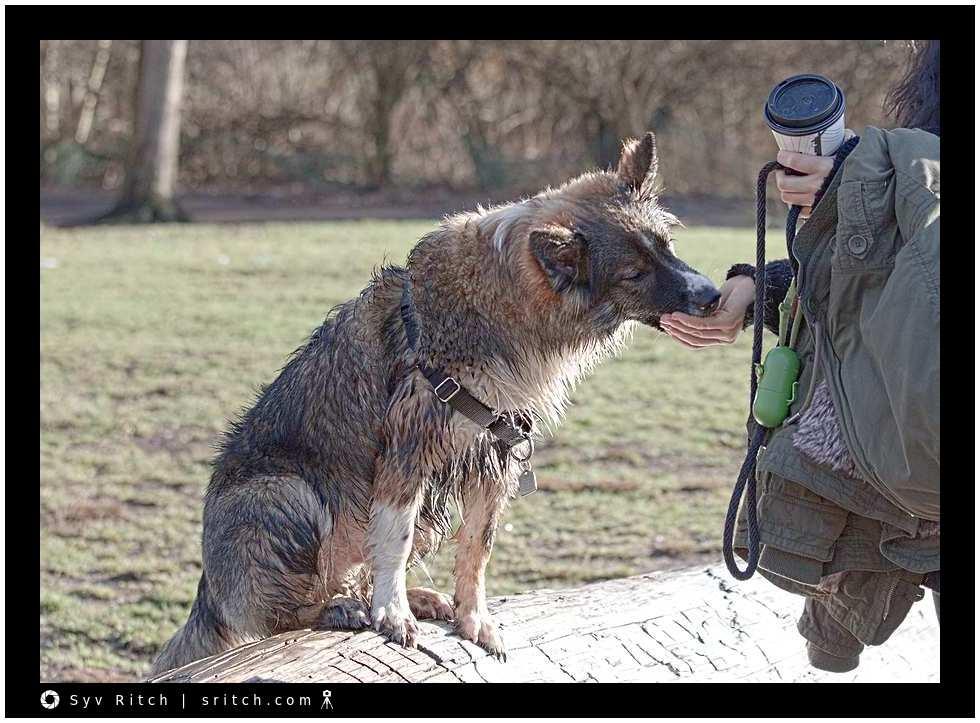 dog earning her treats