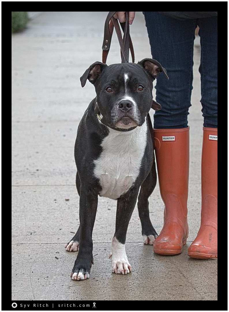 Dog & Hunter boots before the kill
