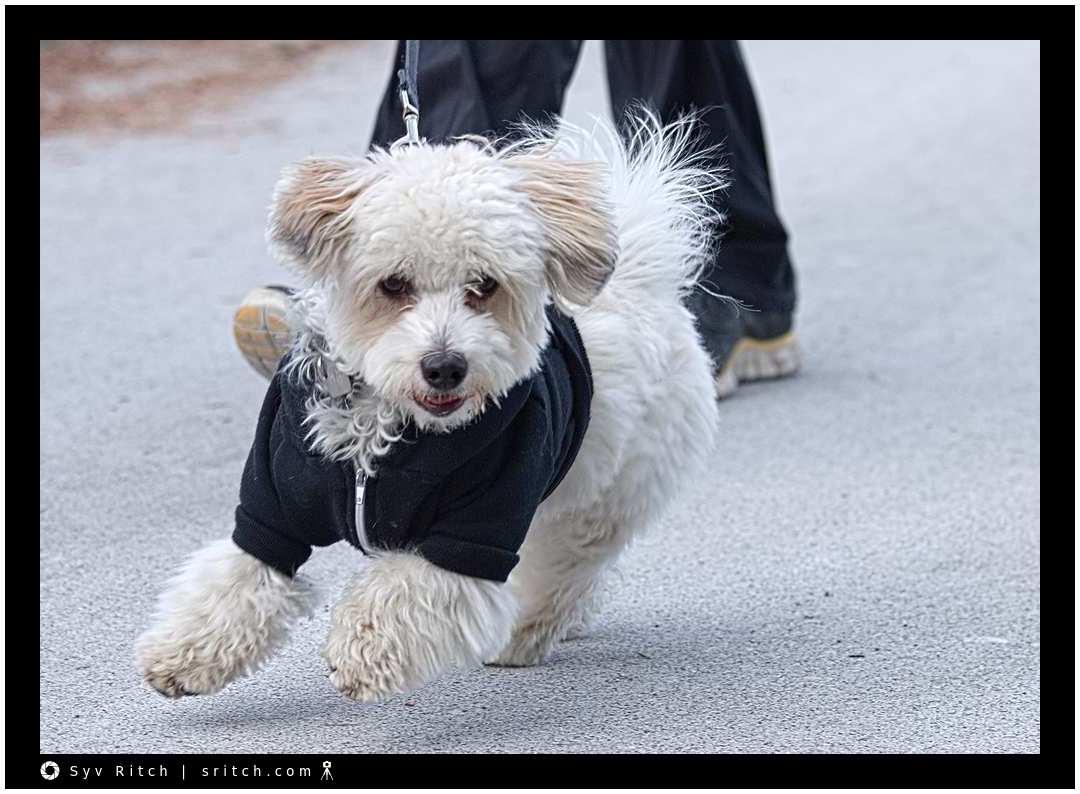 Rambunctious Dog