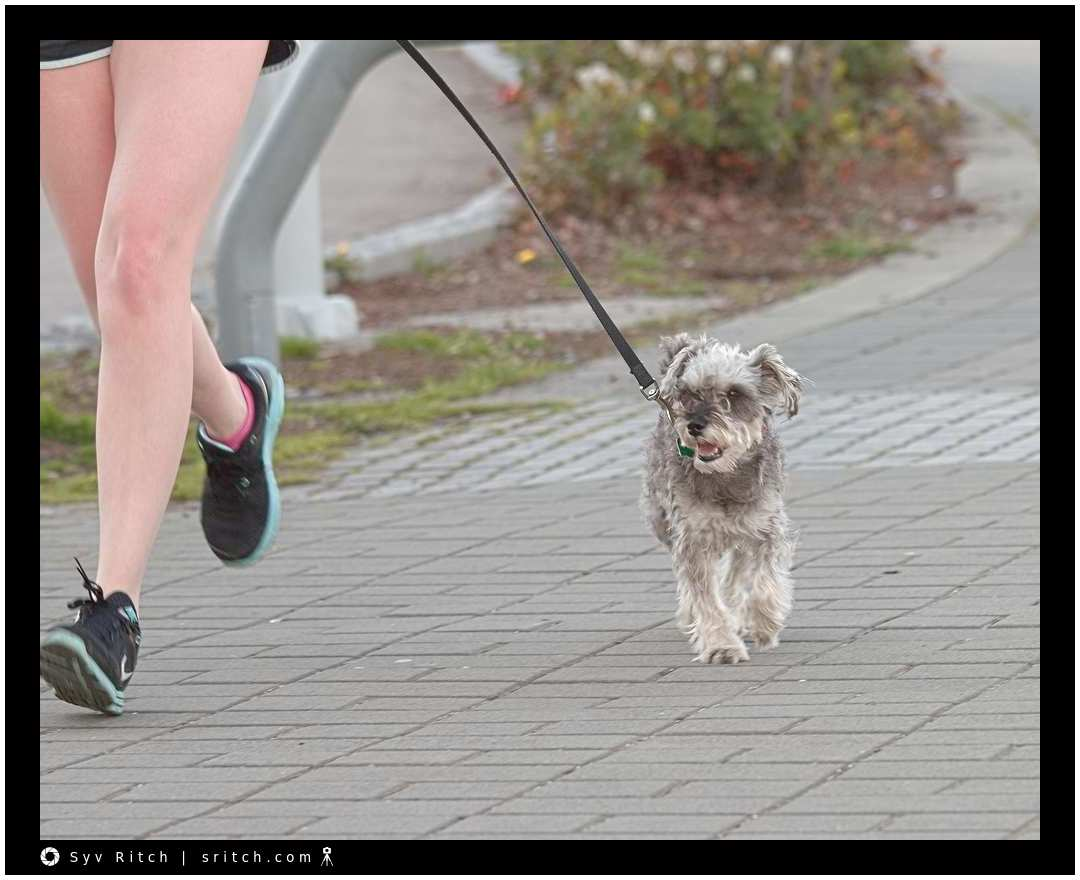 Some dogs are better at jogging