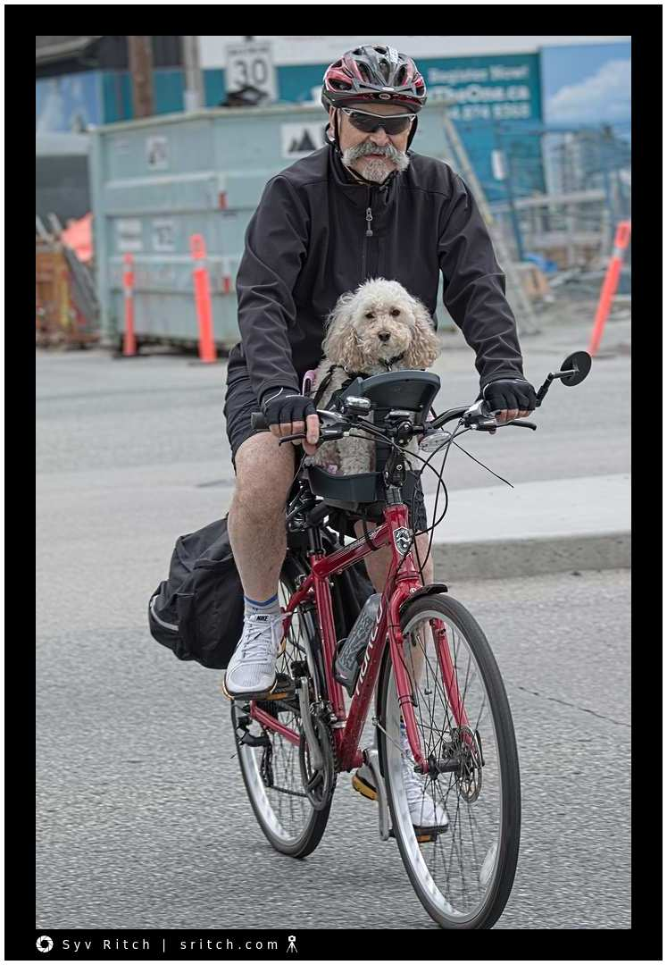 Man with handle bar mustache v dog on bicycle carrier