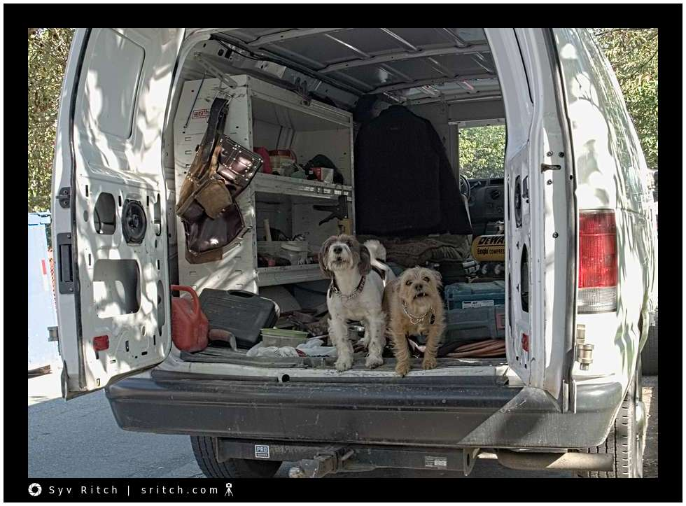 2 very yappy and very loud terriers keeping the 'work truck safe' from thieves.
