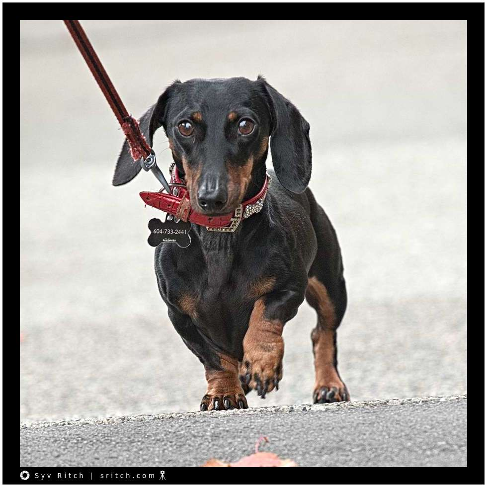 Another 'Sausage' Jogging