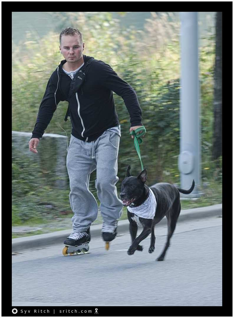 Dog running with man on roller-blades