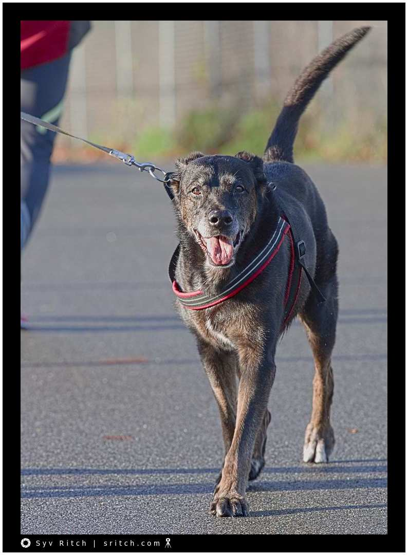 dog with collar and harness