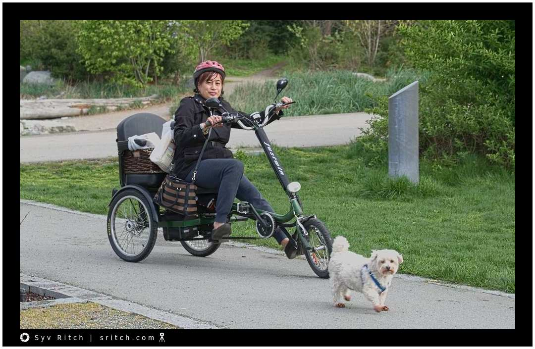 Woman on her tricycle following her dog: Vancouver, BC