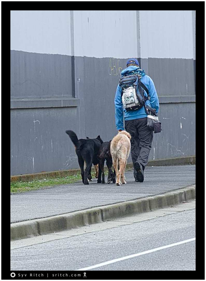 Professional dog walker walking dogs offering to do cat visits