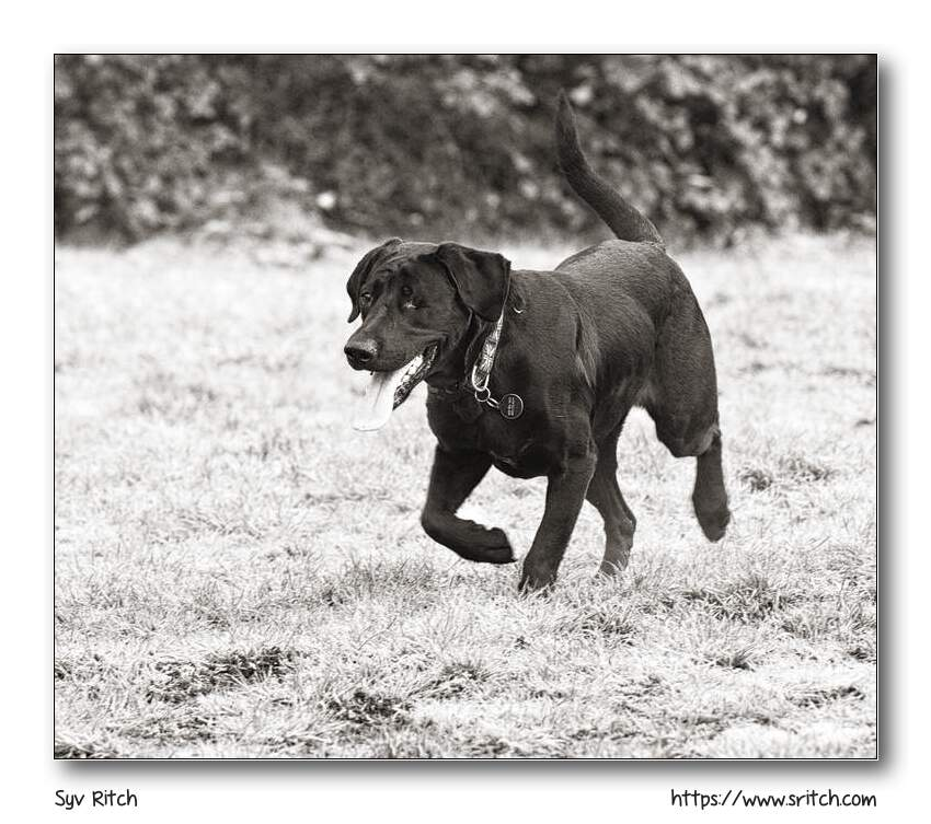 Photographing a Black Dog: Vancouver, BC