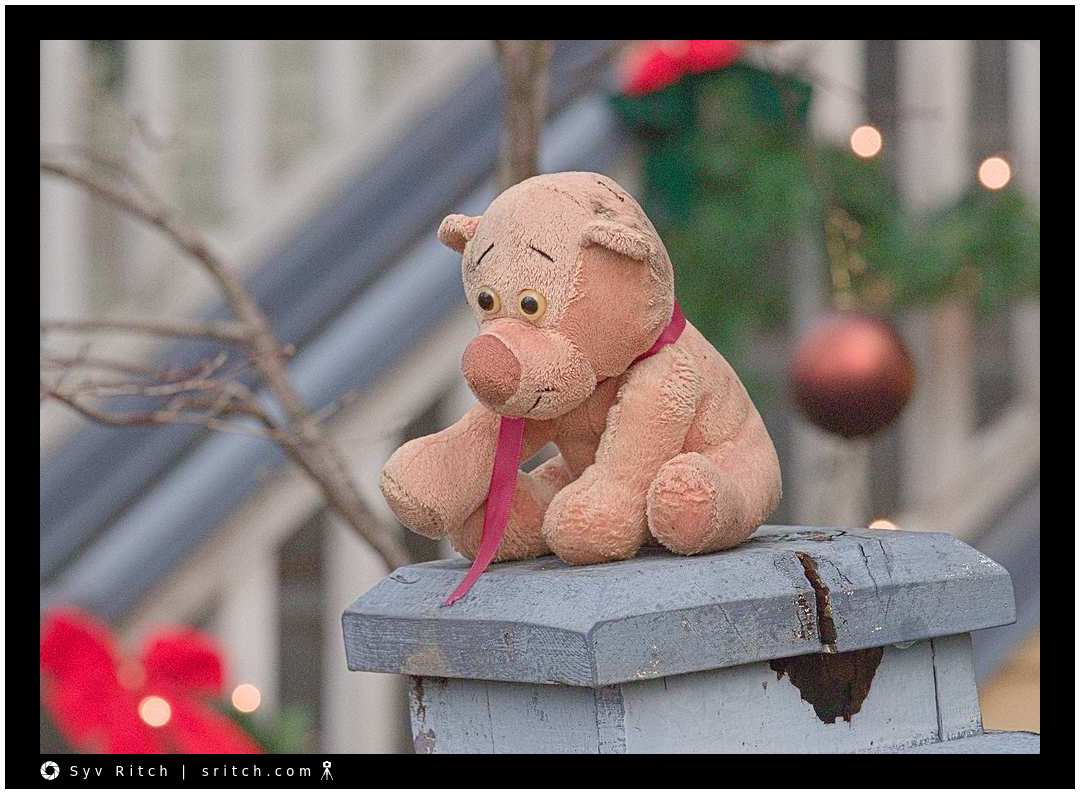 Xmas decorations and a small teddy bear looking like a small dog
