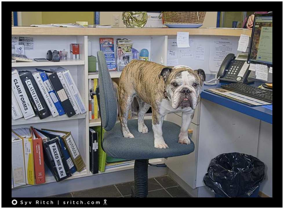 Lily is a 9 years Bulldog and she runs the clinic