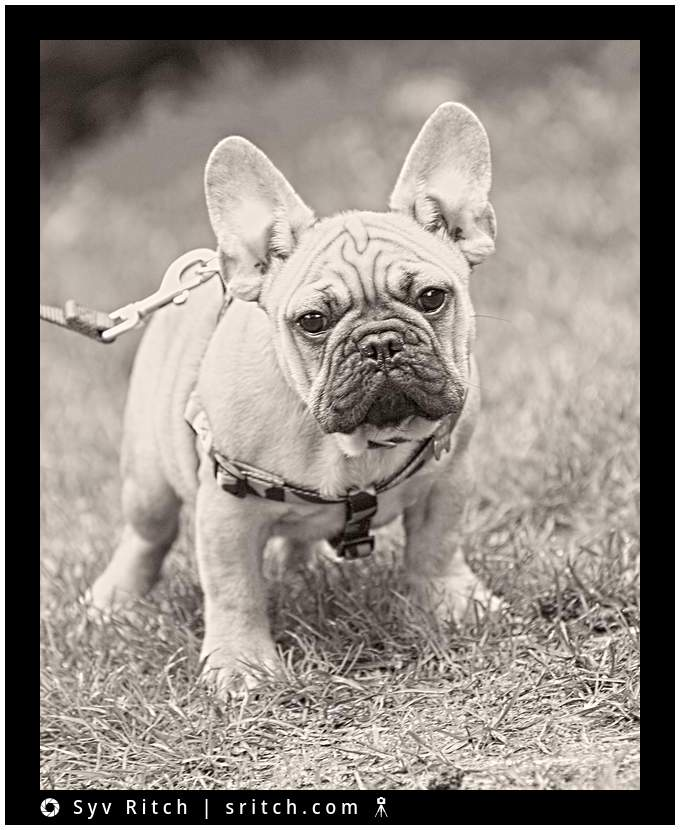 Dog Photography | Vancouver, BC